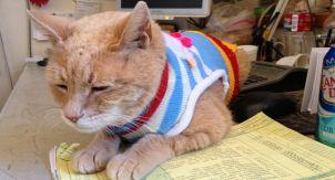 На Аляске умер кот, 20 лет занимавший пост мэра