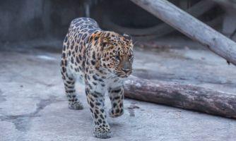 Нужно ли переселять Московский зоопарк за МКАД?