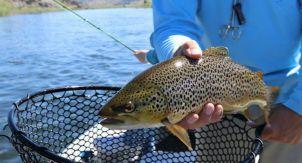 Рыбалка. Выбираем спиннинг для форели