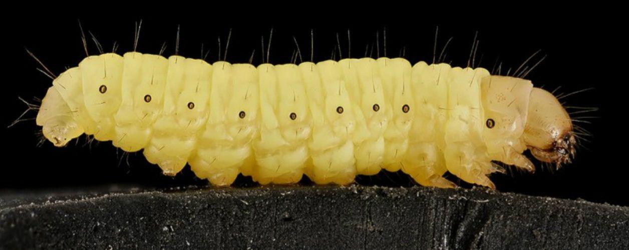 Таблетки с лапками. Как учёные ищут лекарства в жуках, пауках и морских огурцах