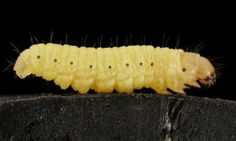 Как учёные ищут лекарства в жуках и пауках
