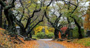 Осень в Нью-Йорке. Тихо, красиво и никого вокруг