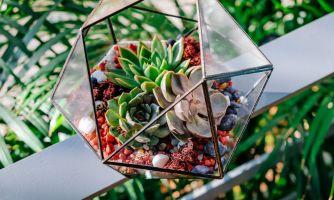 Как сделать собственный флорариум