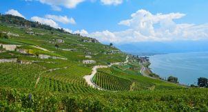 Женевское озеро. Большой швейцарский куш