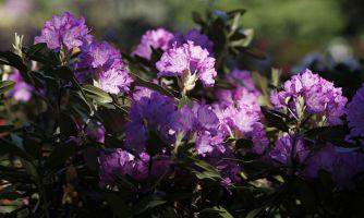 Куда пойти весной? Японский сад в ГБС