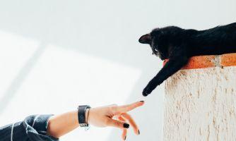Коты-манипуляторы