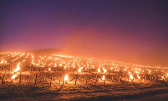 Как во Франции защищают виноградники от заморозков