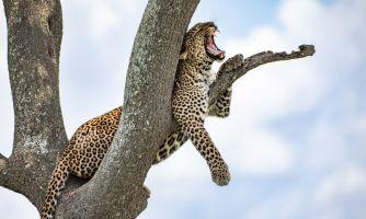Африканские истории. Знакомство с леопардом