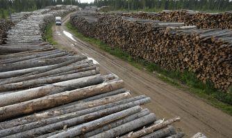 Небывалое в истории истребление первозданных лесов