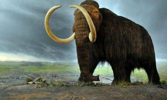 Мамонт. Статусная добыча ледникового периода