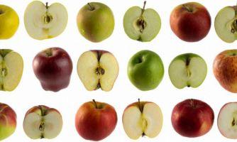 Гид по сортам яблок. Краткая характеристика образцов
