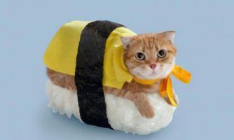 Как правильно есть суси?