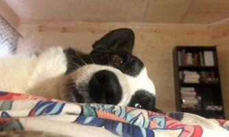 Собачья жизнь, или Один день будущего кинолога