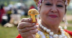 Почему только русские едят грибы из леса?