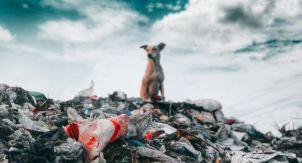 7 стран с самой плохой экологией
