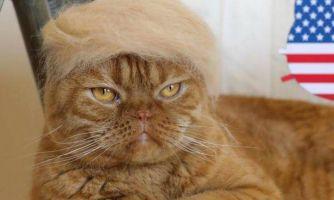 Как приучить кошку к вычесыванию шерсти?