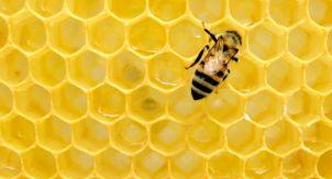 Разбираются ли пчёлы в мёде?