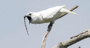 Птицы. Уменьшают свои органы и спят на лету
