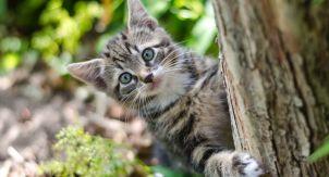 12 причин не выпускать кошку на свободный выгул