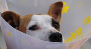Как понять, что ветеринар не лечит