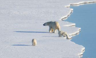 Как прошёл ваш день полярного медведя?