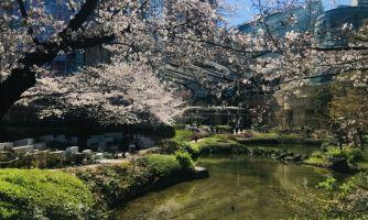 О чём мечтают японские саларимэны на карантине