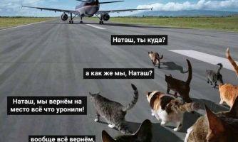 Котики как зеркало русской жизни