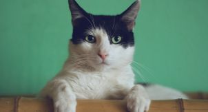 9 заблуждений хозяев о туалетных проблемах кошек