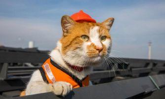 Кот Мостик нашел новую работу и переезжает