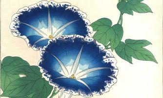 Что такое японский цветочный календарь