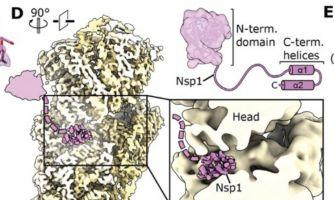 Как коронавирус борется с иммунной системой