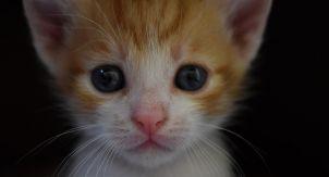«Познакомить кошку с собакой без стресса нельзя»