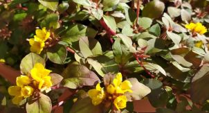 Сентябрь в Ботаническом саду