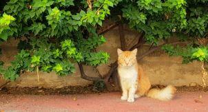 Котики на Кипре