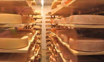 А не вспомнить ли нам пошехонский сыр?
