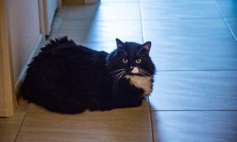 Что в жизни главное для порядочного кота?