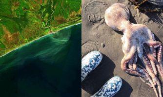 Власти назвали основную версию загрязнения Камчатки