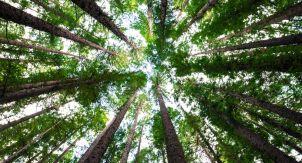 «Люди среди деревьев» —книга не для слабонервных