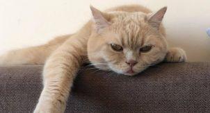 Абстрактное мышление. Как думают кошки