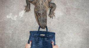 Ким Кардашьян, забота о крокодилах и сексизм