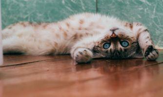 Кошки намекают на то, чего им не хватает