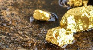 Обычная картошка дороже золота — это как?