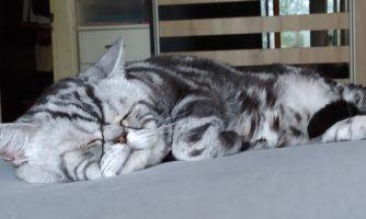 8 вопросов зоопсихологу о кошачьей дружбе
