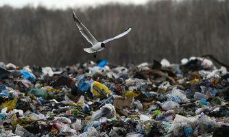 Правительство ставит мусорную реформу на паузу