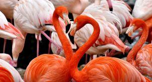 Розовый фламинго — дитя Милана