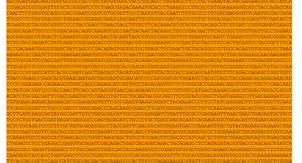 «Коды взломаны». мРНК-вакцины против COVID-19