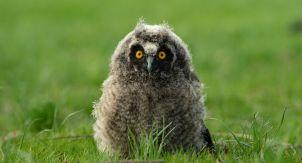 Нужно ли спасать птенцов, выпавших из гнезда