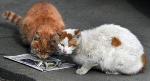 Найти смирение в заботе о других