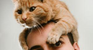 Что делать, если кошка ласковая до навязчивости