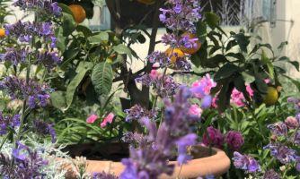 Флоренция. Сад Боболи и цветущие пионы